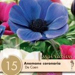 Анемона Coronaria De Caen Mixed Colours2