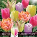 Combi Tulip Soft Tones