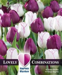 Combi_Tulip_Triumph_Purple_&_White