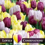 Combi_Tulip_Yellow,Purple_&_Lilac