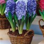 Delft Blue1