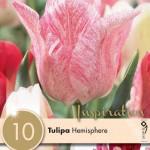 TULIPA-HEMISPHERE4